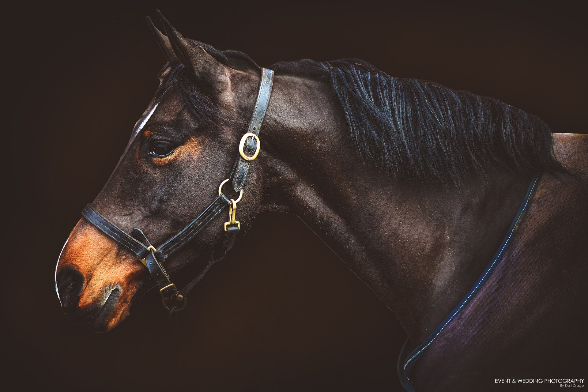 High Quality Equine Horse Photography In Northamptonshire